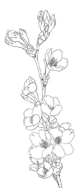 344x780 Flower Line Drawing Line Drawings Flower, Drawings