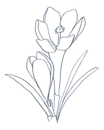 408x510 Flower Sketches