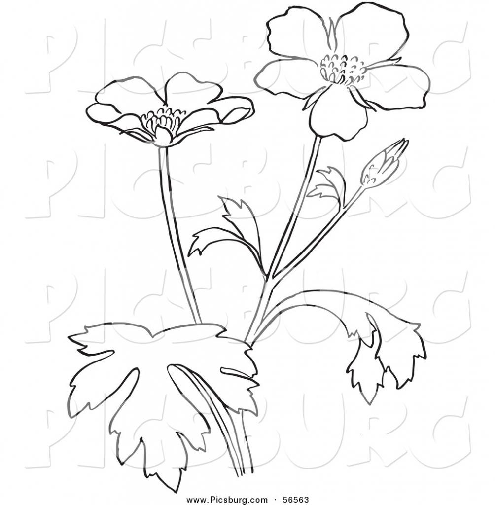 1004x1024 Flowering Plants Drawing
