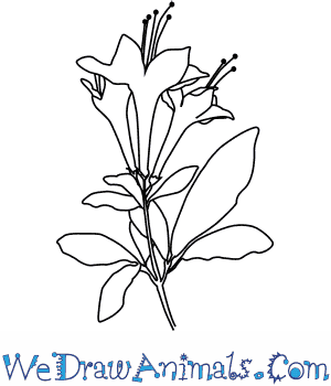300x350 How To Draw A Honeysuckle Flower