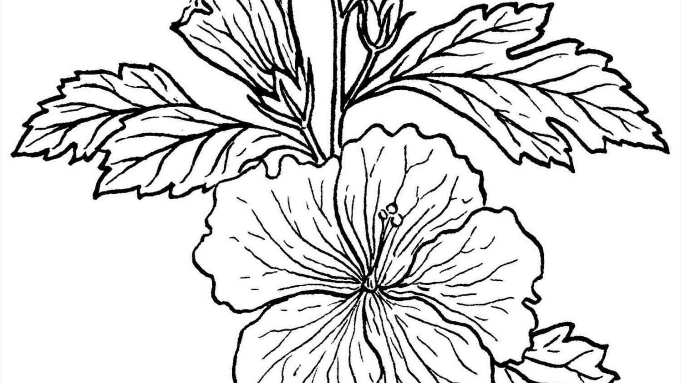 1366x768 Rainforest Plants Flower Coloring Pages Free Printable Adult