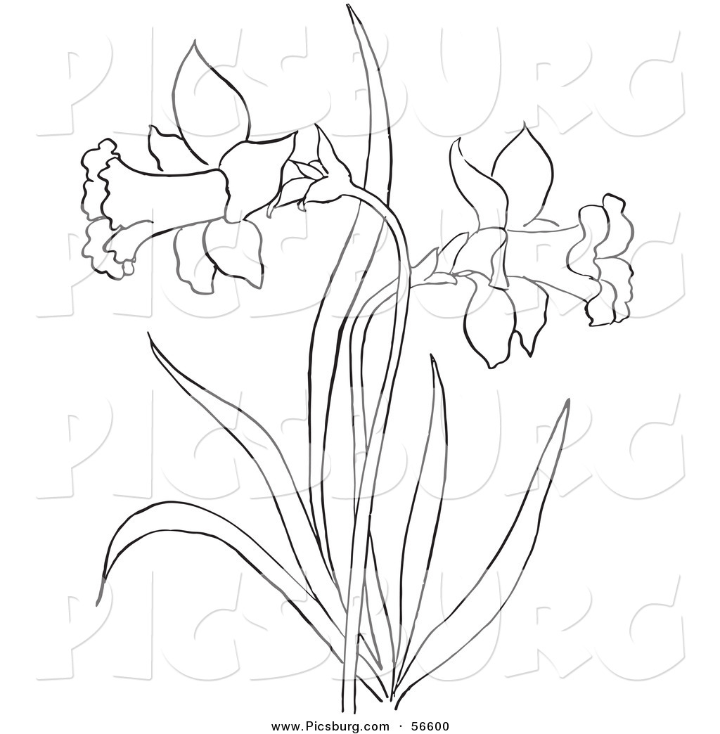 1024x1044 Clip Art Of A Coloring Page Of A Dandelion Flower Plant By