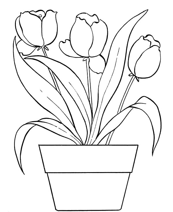 600x734 draw flower pot images