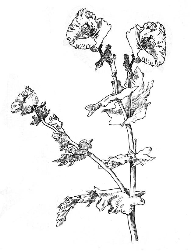 627x827 Flower Sketches
