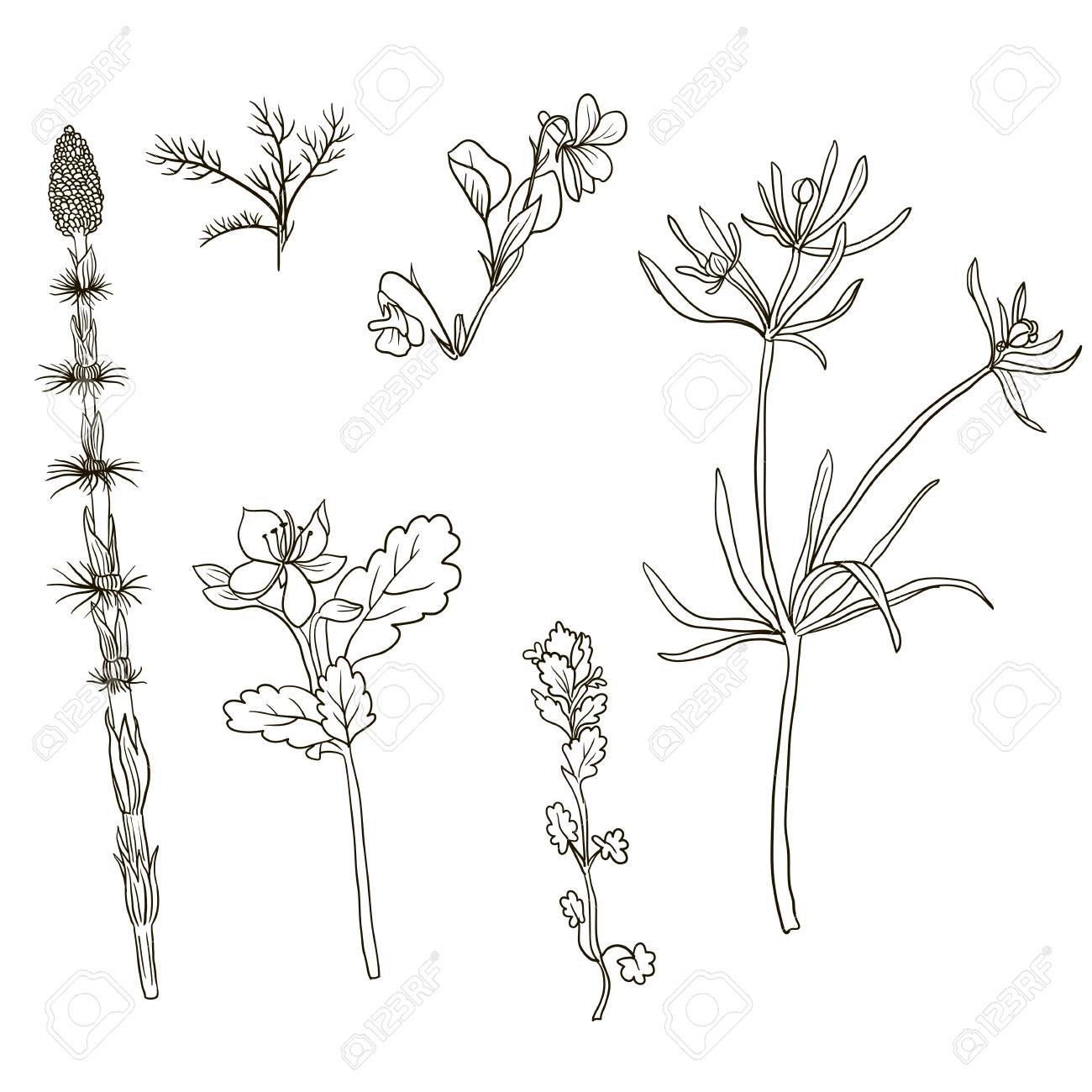 1300x1300 Vector Set Of Line Drawing Wild Flowers And Herbs , Isolated