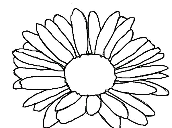 600x446 Simple Drawing Aster Flower Coloring Pages Bulk Color