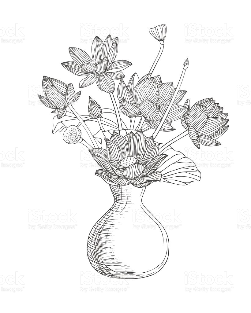 820x1024 Lotus Flower Vase Drawing