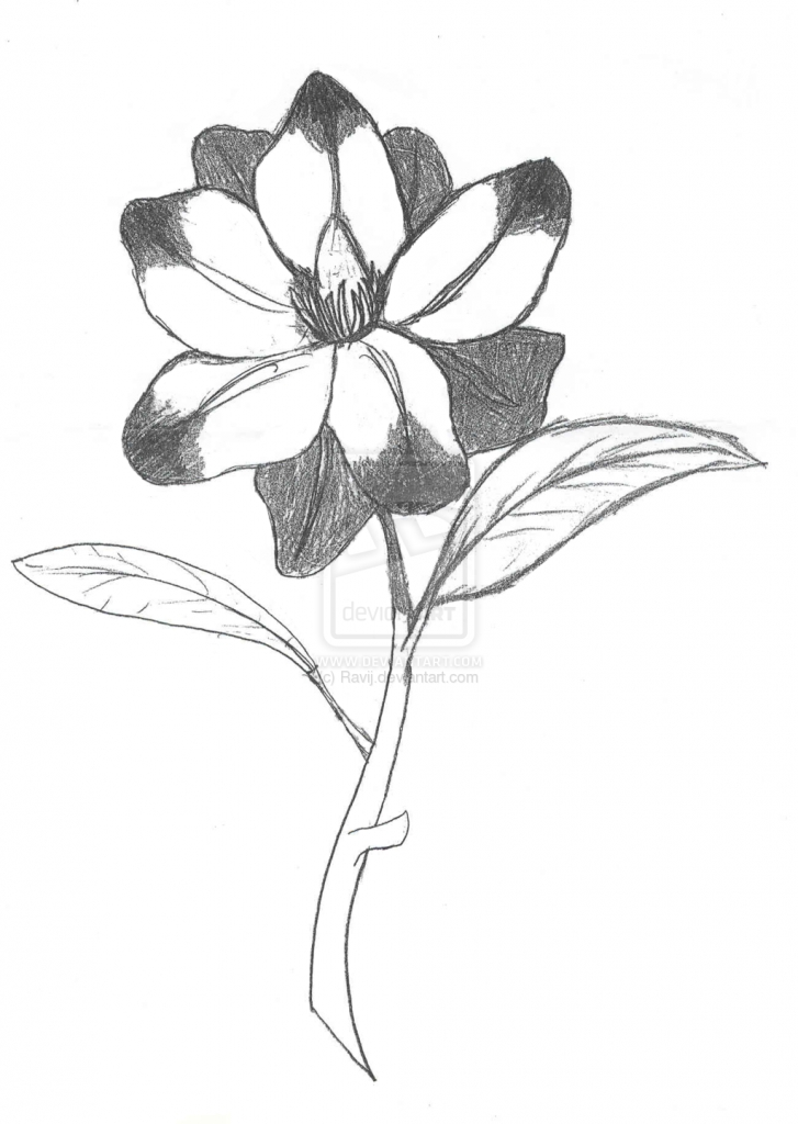 727x1024 Sketch Of A Flower Flower Sketches Images All Wallpapers New