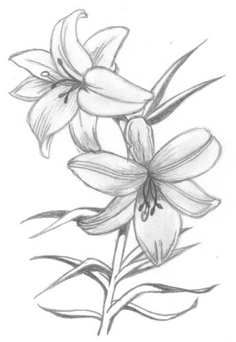 344x497 Sketch Of Flowers