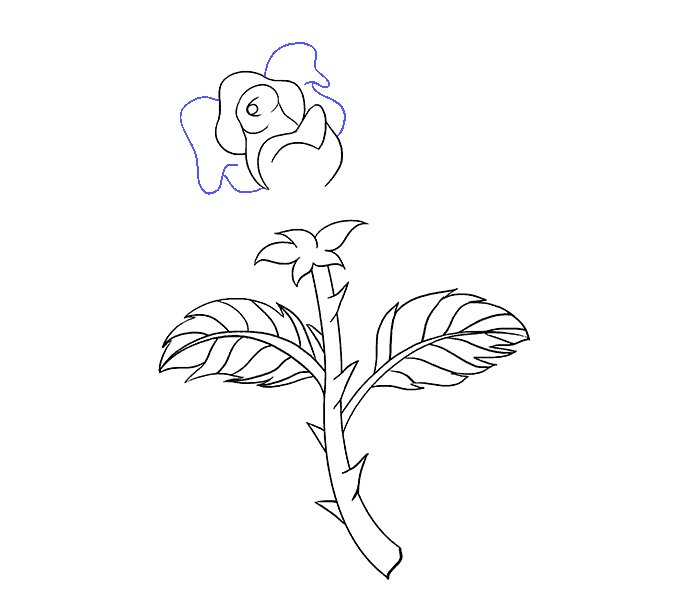 678x600 How To Draw A Rose In A Few Easy Steps Easy Drawing Guides