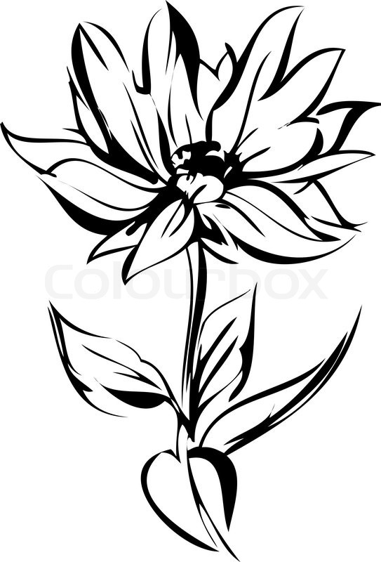 543x800 Sketch Of Blossoming Out Flower On A Stem Stock Vector Colourbox