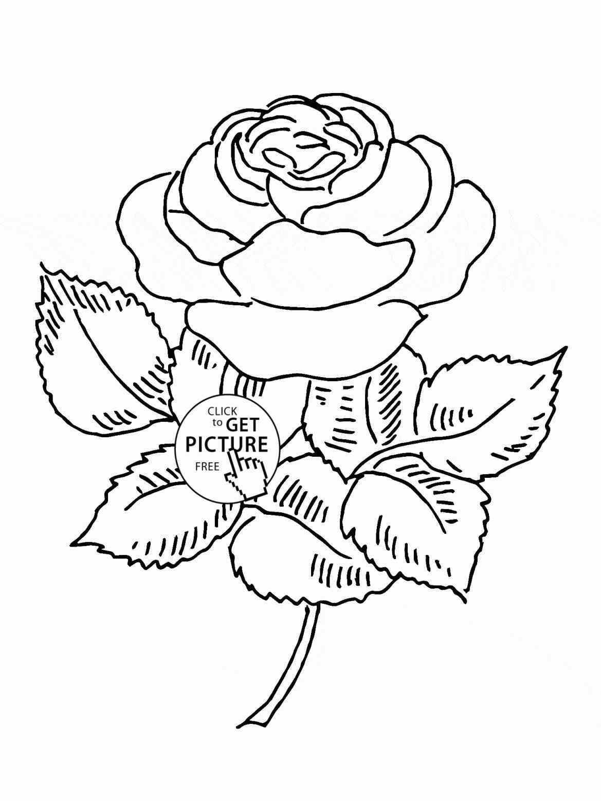 Flower Vase Drawing