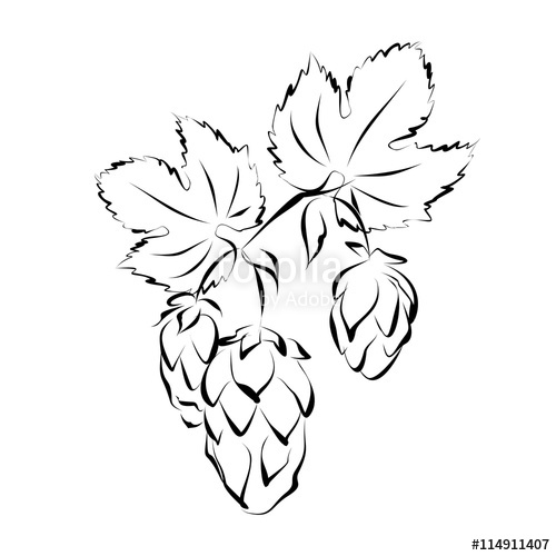 500x500 Hop Vine With Flowers (Seed Cones). Hand Drawn Vector Illustration