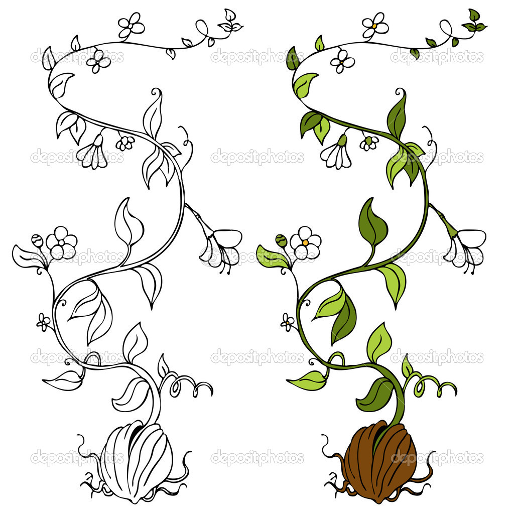 Flower Vines Drawing
