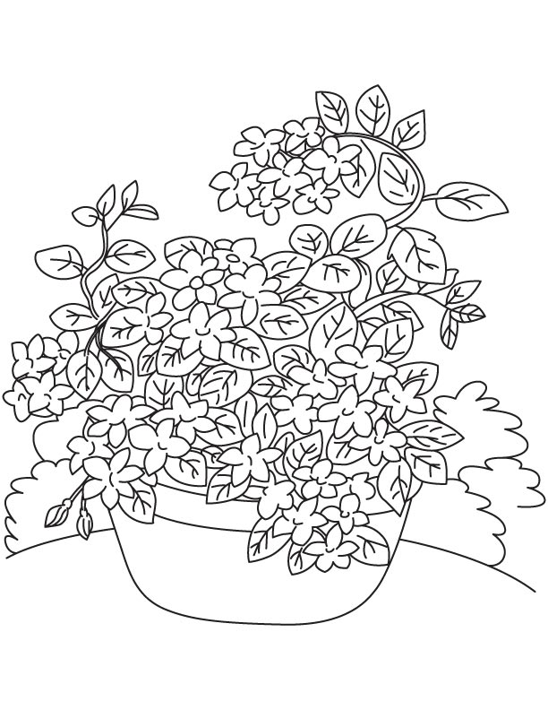 This is an image of Dashing Vine Coloring Pages