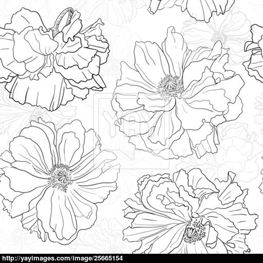 512x512 Hand Drawn Floral Wallpaper With Poppy Flowers Vector