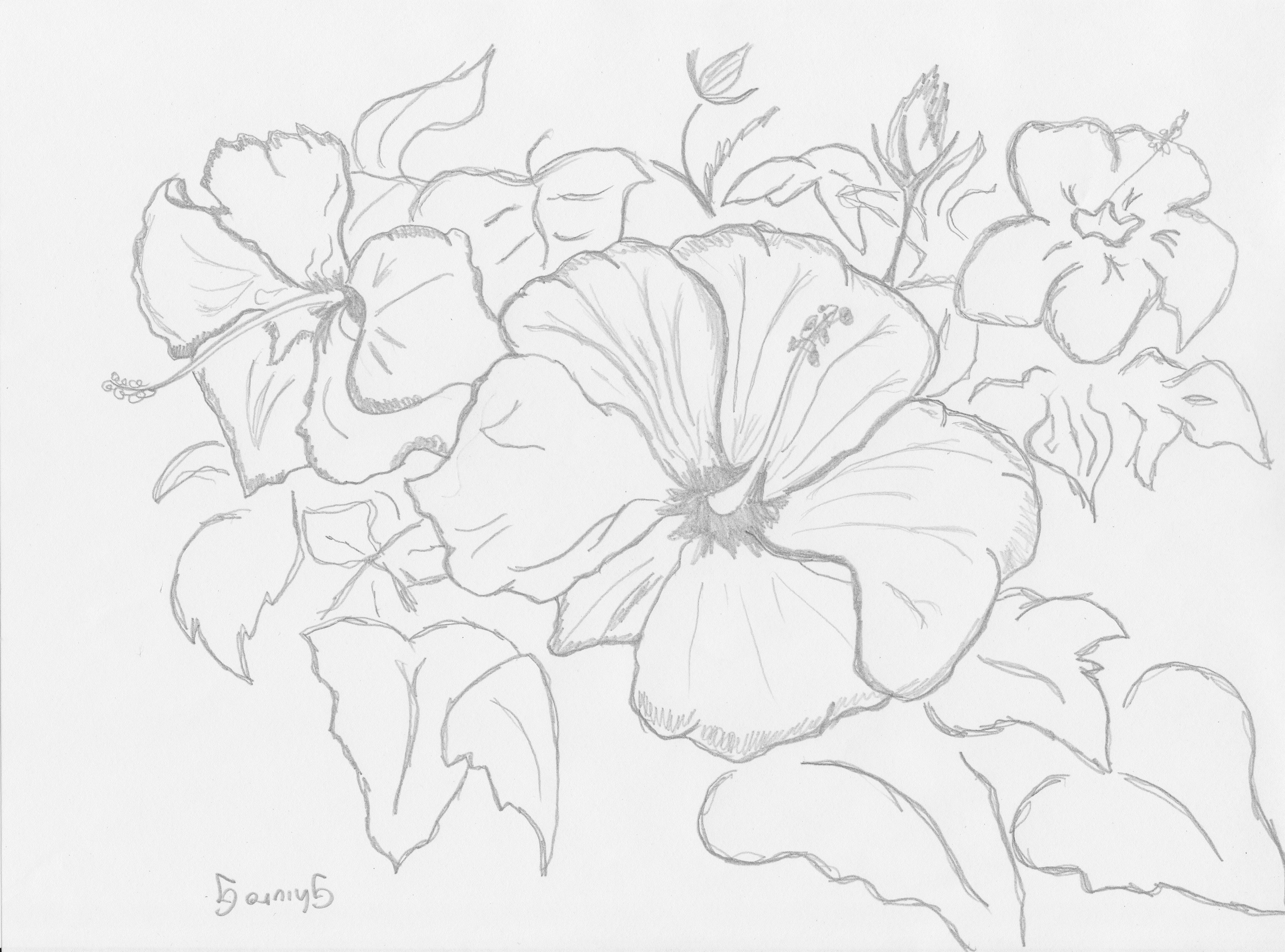 3320x2460 Sketches Of Flowers Flowers And Plants Gallery Art For Sale
