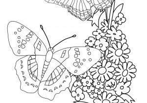 300x210 Flower With Butterfly Drawing How To Draw A Butterfly On A Flower