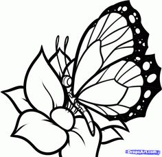 236x229 How To Draw A Butterfly On A Flower, Butterfly And Flower, Step By
