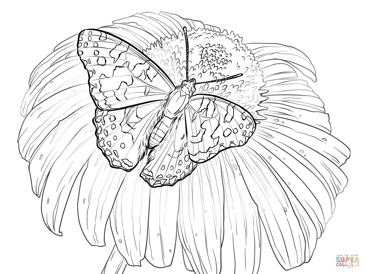 Flower With Butterfly Drawing At Getdrawings Com Free For Personal Tropical Coloring Pages 1199x899