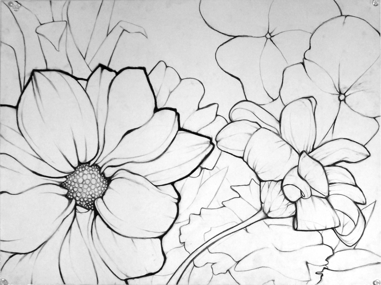 Flowering Plants Drawing