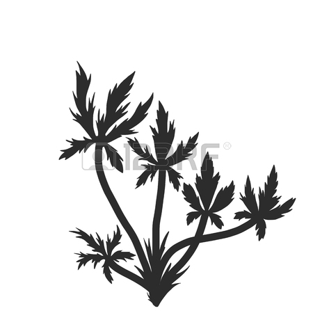 450x450 Dill Plants, Floral Composition With Wild Plants, Drawing Floral