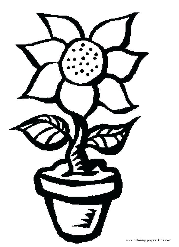 726x1000 Flower Pot Coloring Page Flower Pot Easy Drawing Large Flower Pot