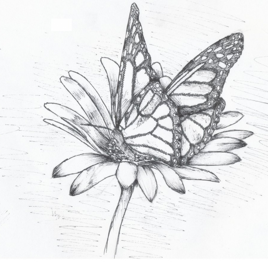 1024x1002 Butterfly Sucking Nectar From Flower Drawing Drawing Flower