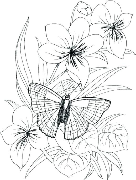 518x684 Butterfly And Flower Coloring Pages Synthesis.site