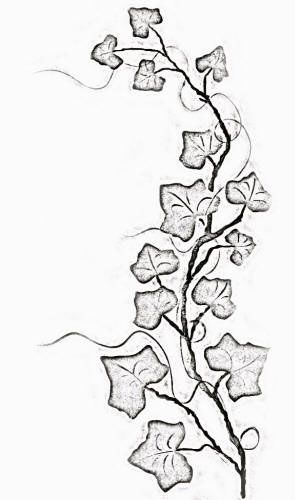 295x500 Collection Of Ivy Vine Tattoo Sample