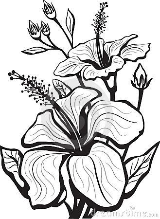329x450 Gallery Picture Drawing Flower Art,