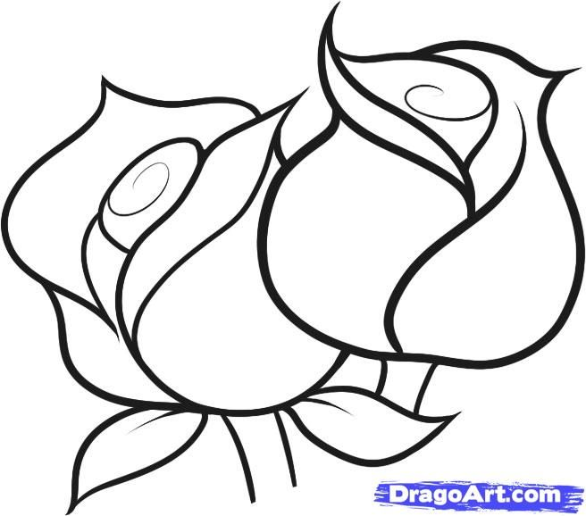 656x578 Easy To Draw Roses