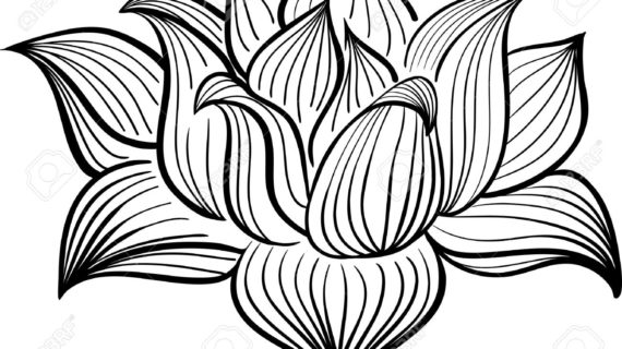 570x320 Lotus Flower Drawing Black And White Illustration Of Hand Drawn