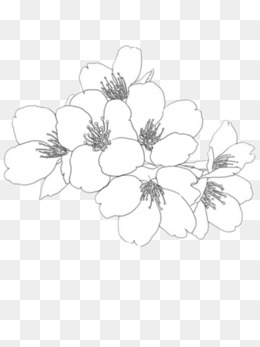 260x347 Sketch Flower Png Images Vectors And Psd Files Free Download
