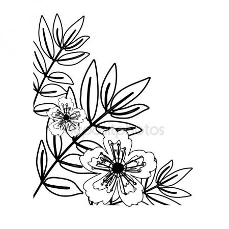 450x450 Anemone Flowers Drawing And Sketch With Line Art Stock Vector