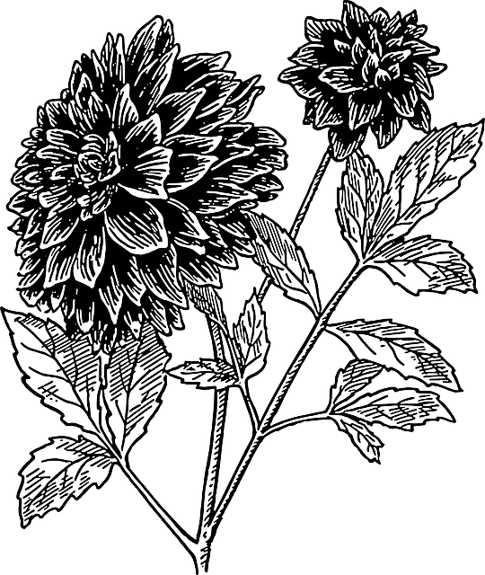 540x640 Black, Drawing, Sketch, Flower, White, Flowers, Plant