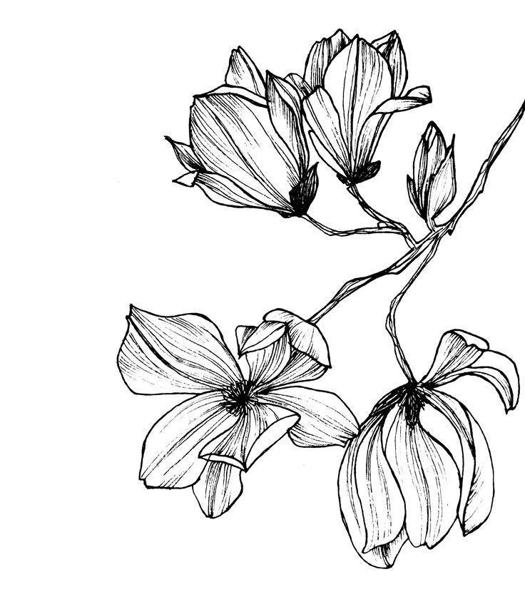 Flowers drawing black and white at getdrawings free for 736x847 16 best graphic images on pinterest flower clipart flower mightylinksfo