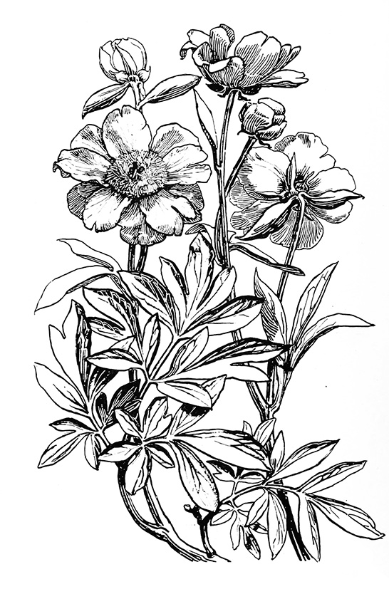 546x827 gallery black and white floral sketches
