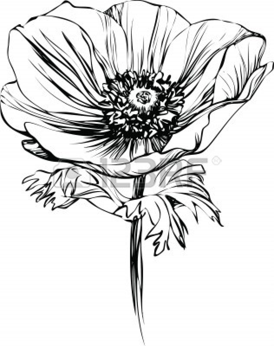 Flowers drawing black and white at getdrawings free for 948x1200 black and white picture poppy flower on the stalk stock vector mightylinksfo