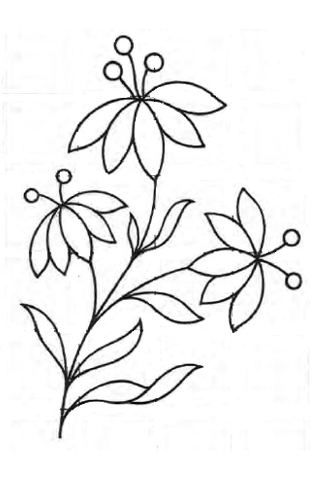668x986 Photos Flower Drawing Designs,