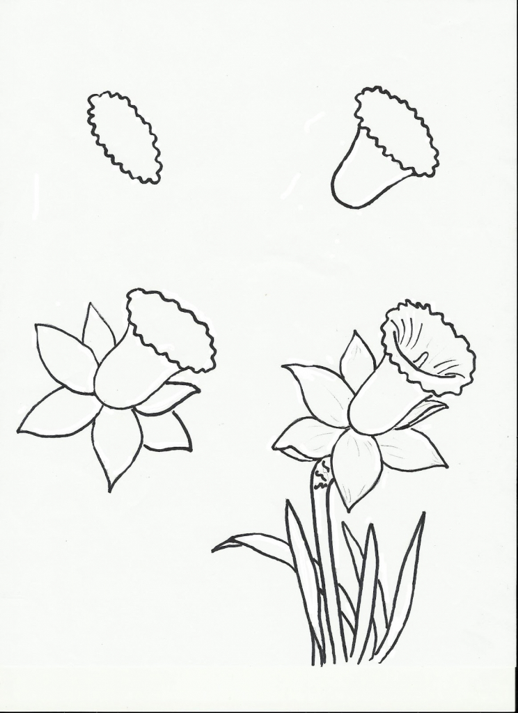 744x1024 Easy Flower Drawing Tutorial How To Draw Flowers Drawing Flowers