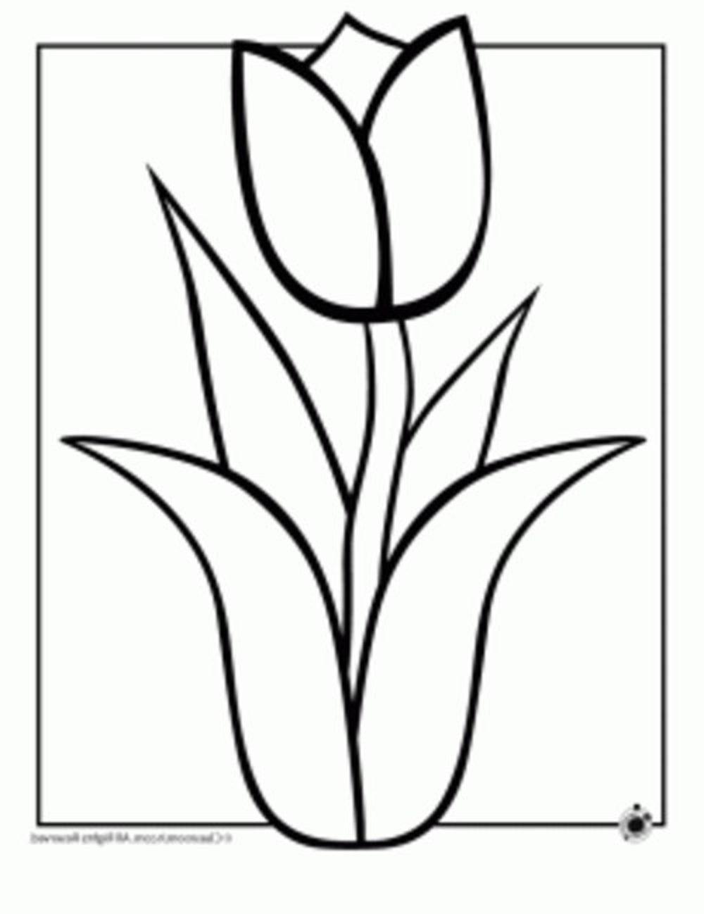 1000x1298 Flowers Drawings Easy