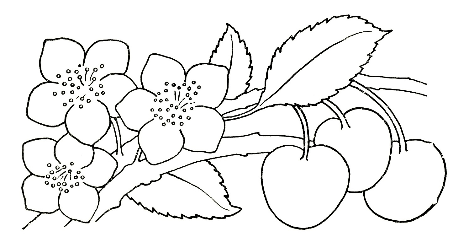 1445x771 Drawing Pictures Of Flowers For Kids