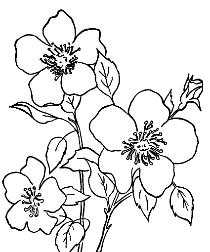 425x510 Gallery Flower Drawings For Kid With Colour,
