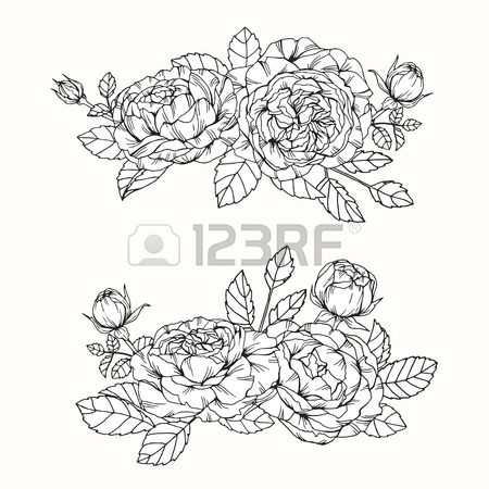450x450 Anemone Flowers Drawing And Sketch With Line Art On White
