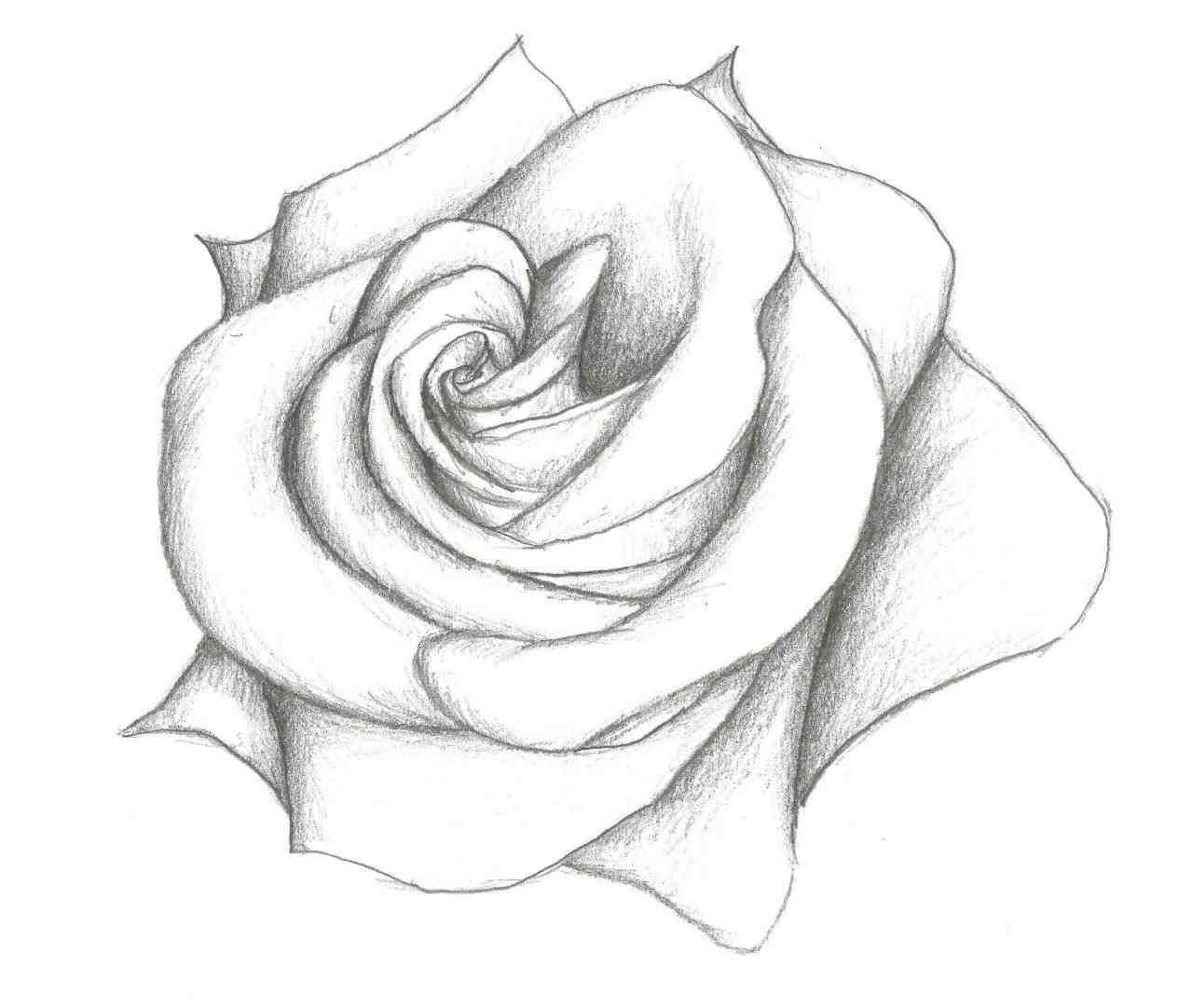 1264x1082 Pencil Drawings Flowers