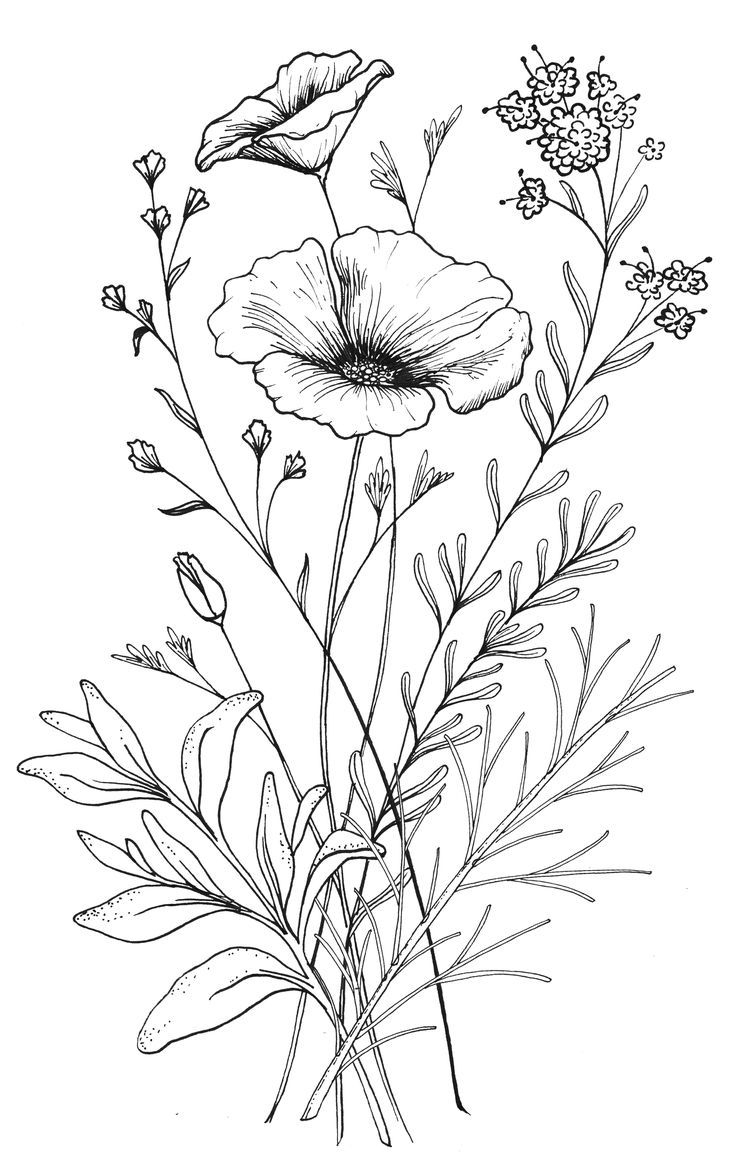 736x1163 Bouquet Of Flowers Drawing