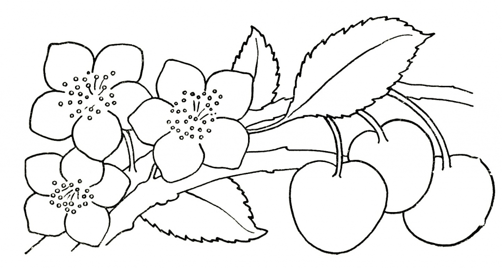 1024x546 Flowers Drawing For Kids Pictures Of Flower Drawings Clipartsco