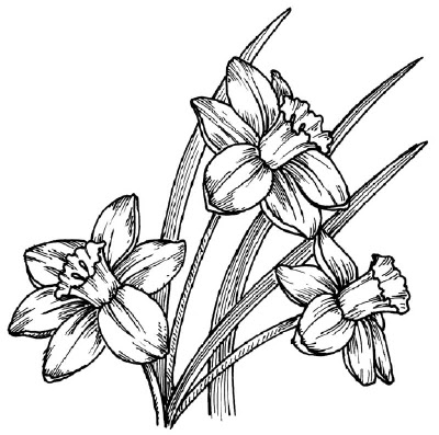 400x397 Flowers Drawings Art Meaning