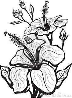 236x322 Hibiscus Bush Illustration